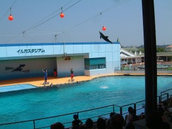 Dolphin_show1