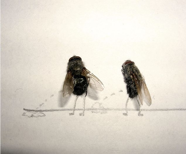 Dead_flies_art_02