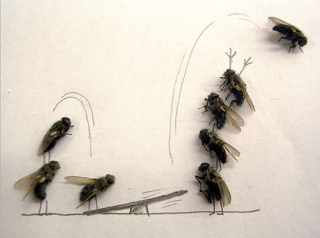 Dead_flies_art_05